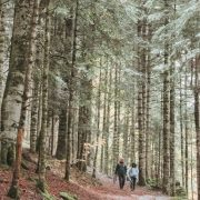 Boravak u prirodi kao lek: Najatraktivnija mesta za izlete u Zapadnoj Srbiji